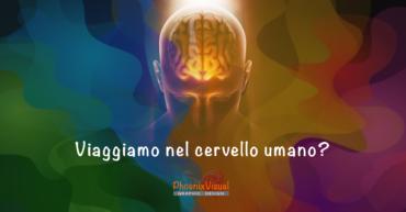 Colori, Comunicazione ed Effetti Pscicologici Viaggiamo nel cervello umano PhoenixVisual Graphic Design Vicenza